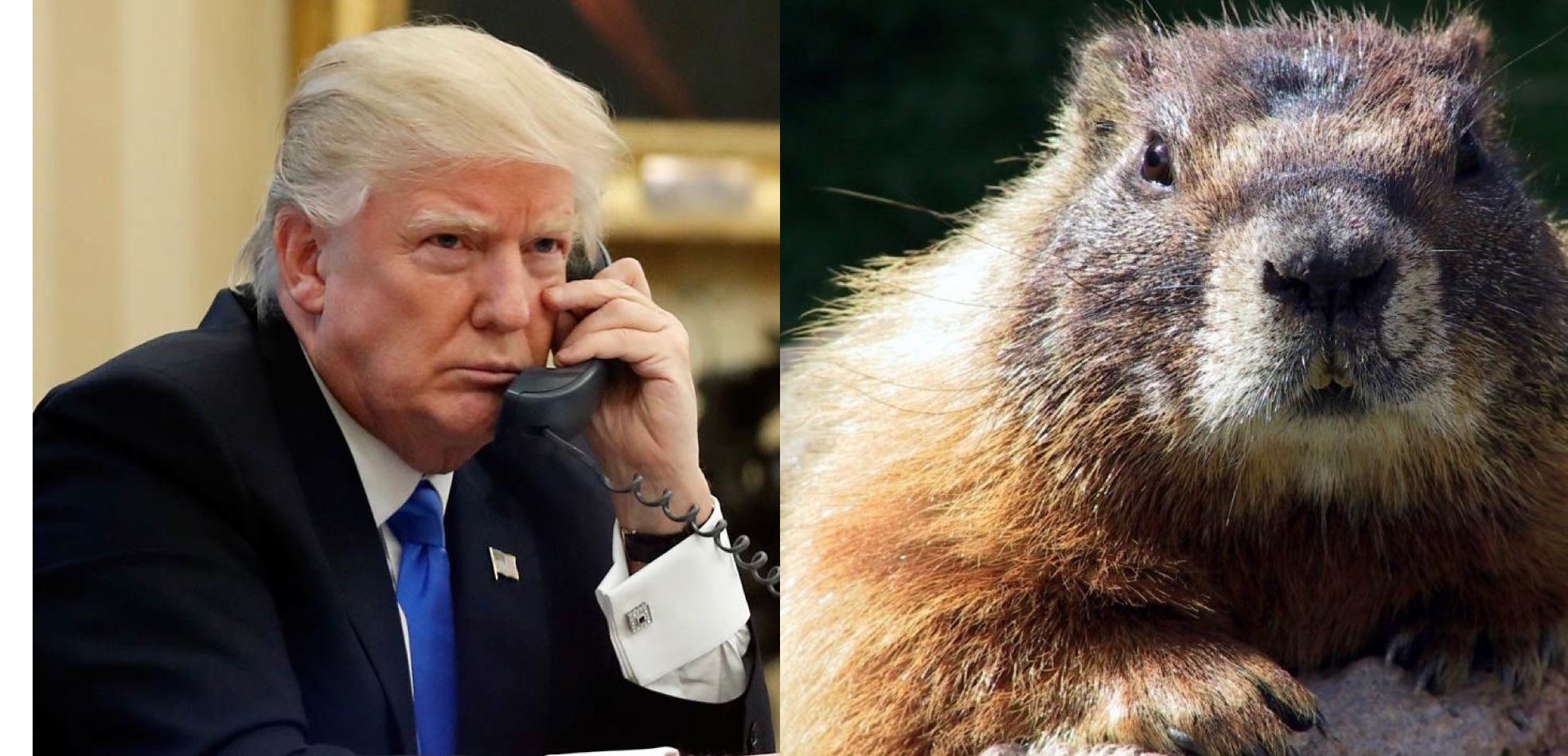 Trump calls Punxsutawney Phil.